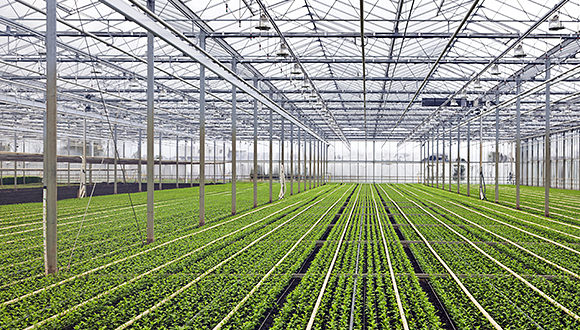 Kelvion In Agricultural Greenhouse Applications